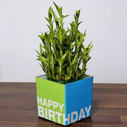 3 Layer Bamboo Plant For Birthday: Indoor Plants
