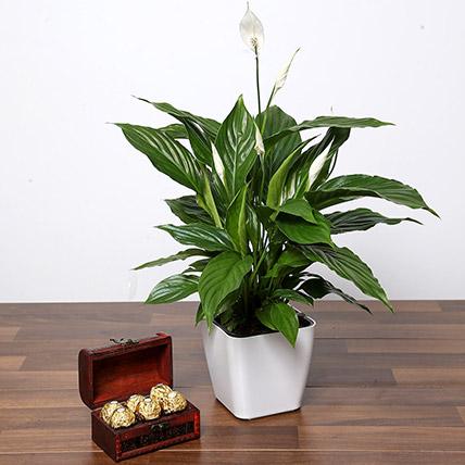 Amazing Peace Lily Plant and Chocolates: Chocolates