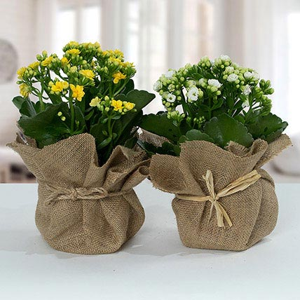 Jute Wrapped Dual Potted Plants: Home Decor Items