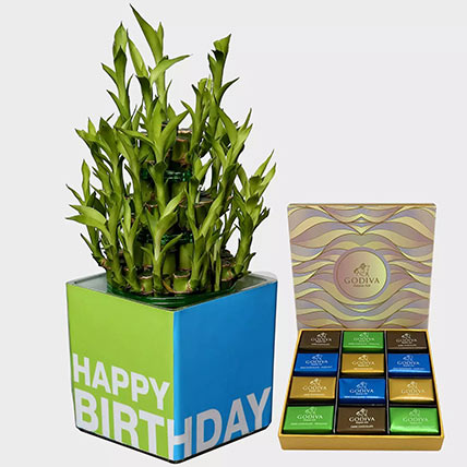 Lucky Bamboo Plant and Godiva Chocolates: Birthday Chocolates