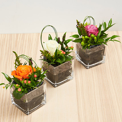 Set Of 3 Rose Vase Arrangements: New Arrival Gifts