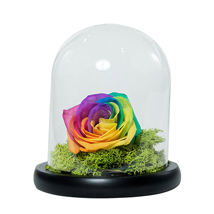 Splendid Rainbow Rose: Forever Roses