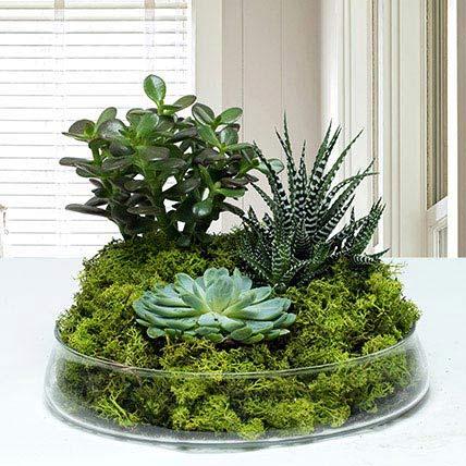 Small Glass Green Wonder: Dish Gardens