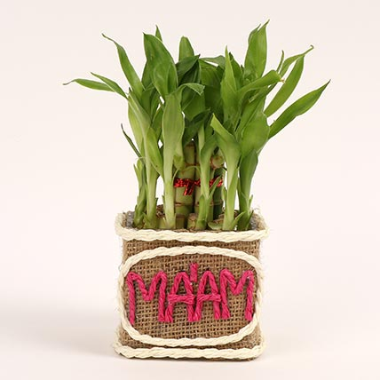 Two Layer Lucky Bamboo For Teacher: Teachers Day Gifts