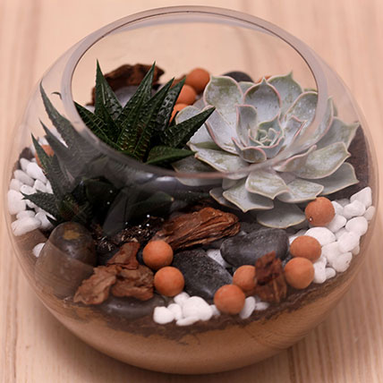 Decorative Succulents In Fish Bowl: