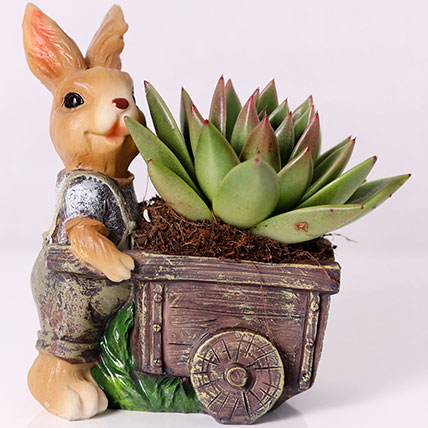 Echeveria Plant In Rabbit Cart Pot: 1 Hour Gift Delivery