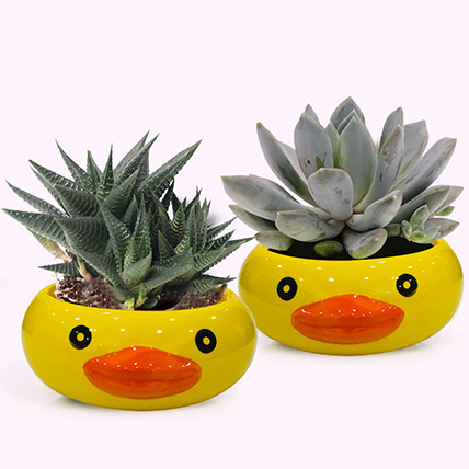Frog Face Pots with Plants: Plant Combos
