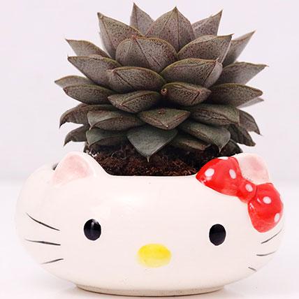Hello Kitty Pot of Echeveria Plant: Plants