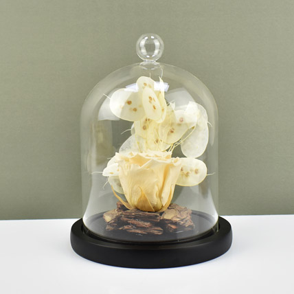 Peach Forever Rose In Glass Dome: Forever Roses