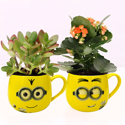 Crassula and Kalanchoe Plants in Emoticon Mugs: Indoor Plants