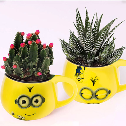 Cactus and Haworthia In Smiley Pots: Cactus Plants and Succulents Plants
