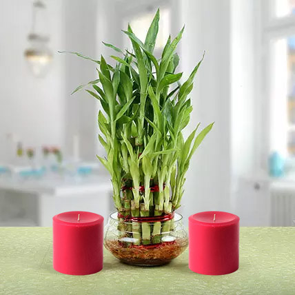 Three Layer Lucky Bamboo Plant N Candles: Lucky Plants