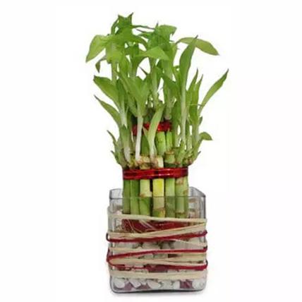 Good Luck Bamboo: Wedding Gift Ideas