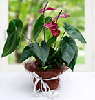 Order Outdoor Plants Online